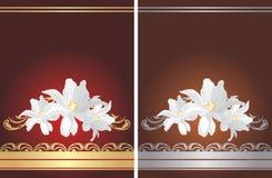 Dos tarjetas de felicitación con las flores blancas Imágenes de archivo libres de regalías