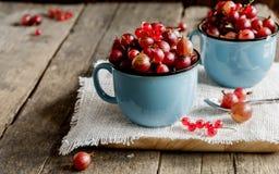 Dos tazas de grosella espinosa Fotografía de archivo libre de regalías