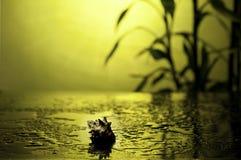 Dos termas vida ainda com bambu Imagens de Stock Royalty Free