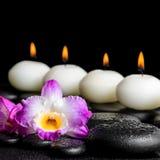 Dos termas vida ainda do dendrobium roxo da orquídea, da folha com orvalho e do ro Fotos de Stock Royalty Free