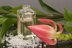 Dos termas vida ainda, garrafa de óleo e flor fotografia de stock