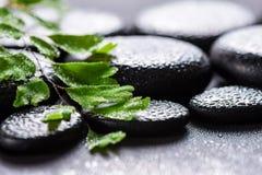 Dos termas vida bonita ainda da samambaia verde do Adiantum do galho no basa do zen Fotos de Stock Royalty Free