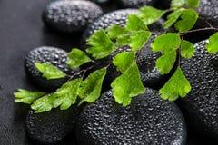 Dos termas vida bonita ainda da samambaia verde do Adiantum do galho no basa do zen Fotografia de Stock