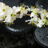 Dos termas vida bonita ainda de pedras do zen com gotas Imagens de Stock