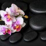 Dos termas vida bonita ainda do phalaenopsis roxo da orquídea no preto Fotografia de Stock Royalty Free