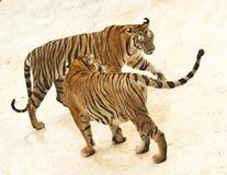 Dos tigres Imágenes de archivo libres de regalías