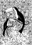 Dos Toucans Imagen de archivo libre de regalías