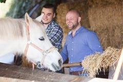 Dos trabajadores de granja que alimentan caballos fotos de archivo libres de regalías