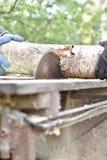 Dos trabajadores que cortan la madera con la sierra circular Foto de archivo libre de regalías