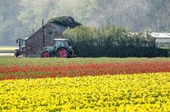 Dos tractores, edificios agrícolas y tulipanes fotos de archivo