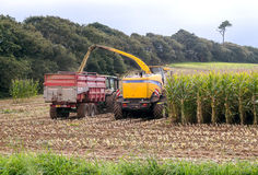 Dos tractores que recogen los campos de trigo Foto de archivo libre de regalías