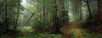 Dos trayectorias en el bosque con niebla en panorámico Fotos de archivo