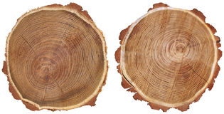 Dos troncos Imagenes de archivo