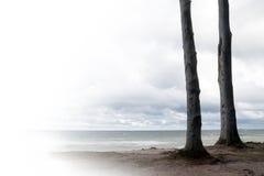 Dos troncos de árbol que se colocan como amigos en la playa, pasando por alto Foto de archivo libre de regalías