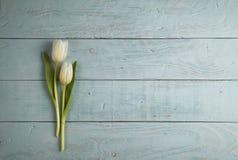 Dos tulipanes Fotos de archivo