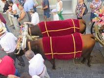 Dos vacas que tiran del carro en el festival local del pueblo Imagen de archivo libre de regalías