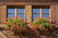 Dos ventanas con las flores Fotografía de archivo libre de regalías