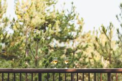 Dos vidrios de vino blanco en el balcón Fotografía de archivo libre de regalías