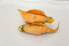 Dos zanahorias Fotografía de archivo libre de regalías