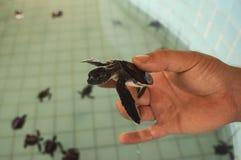 Dosenschildkrötenbauernhof, für die Wartung der Bevölkerung stockfotografie