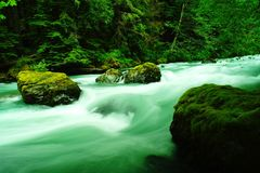 Dosewallips river. Stock Photography
