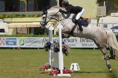 doskakiwania equestrian show Zdjęcie Royalty Free