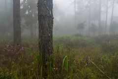 Doskonalić atmosfera las tropikalny z kwiatu polem, sosna i uczymy się zdjęcia stock