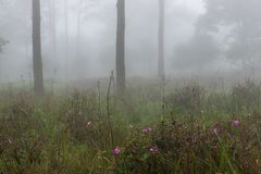 Doskonalić atmosfera las tropikalny z kwiatu polem, sosna i uczymy się zdjęcie stock