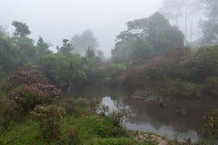 Doskonalić atmosfera las tropikalny z kwiatu polem, sosna i uczymy się obraz stock