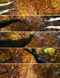 Dosséis de floresta Fotos de Stock Royalty Free
