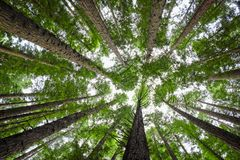 Dossel de árvore fotografia de stock