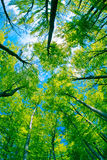 Dossel de árvore Foto de Stock