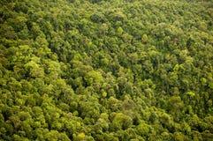 Dossel de floresta foto de stock