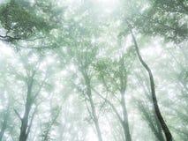 Dossel de floresta com névoa foto de stock royalty free
