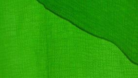 Dossel verde vídeos de arquivo
