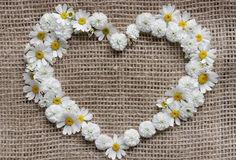 dostępny karciany dzień kartoteki valentines wektor Serce stokrotki Fotografia Stock