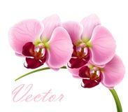 dostępny kwiat odizolowywający orchidei zbyt wektor Zdjęcia Stock