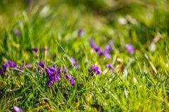 dostępnej eps kartoteki kwiatów trawy ilustracyjny wiosna wektor Obraz Stock