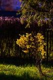 dostępnej eps kartoteki kwiatów trawy ilustracyjny wiosna wektor Fotografia Stock