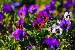 dostępnej eps kartoteki kwiatów trawy ilustracyjny wiosna wektor Obrazy Royalty Free