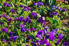 dostępnej eps kartoteki kwiatów trawy ilustracyjny wiosna wektor Zdjęcia Royalty Free