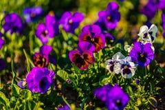 dostępnej eps kartoteki kwiatów trawy ilustracyjny wiosna wektor Obrazy Stock