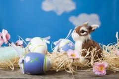 dostępny karciany Easter eps kartoteki powitanie Obraz Royalty Free
