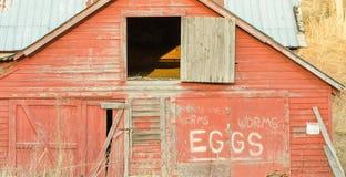 Dostaje Twój jajka & dżdżownicy Obraz Royalty Free