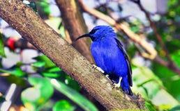 Dosyć Błękitny ptak Zdjęcie Stock
