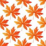 Dosyć kolorowego jesień liścia bezszwowy wzór ilustracja wektor