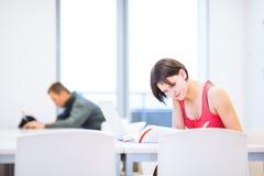 Dosyć, młody studenta collegu studiowanie w bibliotece Obrazy Stock