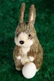 Dosyć trochę biały i brown Wielkanocny królik Fotografia Stock