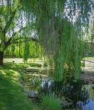 Dosyć trochę park z wheeping wierzbami i stawem Obraz Stock