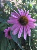 Dosyć trochę roślina obrazy royalty free